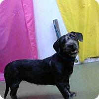 Adopt A Pet :: URGENT on 10/28 @DEVORE - San Bernardino, CA