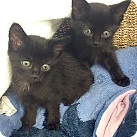Adopt A Pet :: Minnie & Belle - Riverside, CA
