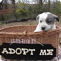Adopt A Pet :: Lincoln - Providence, RI