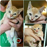 Adopt A Pet :: Milo - Devon, PA