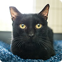 Adopt A Pet :: Nyx - Los Angeles, CA