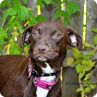 Adopt A Pet :: Callie  Adorable, Affectionate - Woodbury, NJ