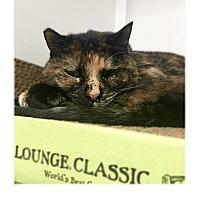 Adopt A Pet :: Lovey - San Carlos, CA