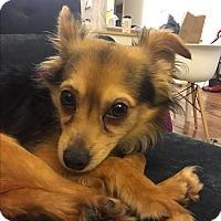 Adopt A Pet :: Panama-Jack - Los Angeles, CA