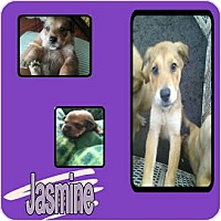 Adopt A Pet :: JASMINE - Hollywood, FL