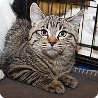 Adopt A Pet :: Wren - Irvine, CA