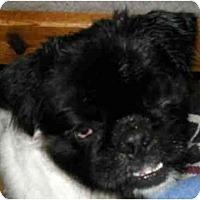 Adopt A Pet :: Omar-NC - Mays Landing, NJ