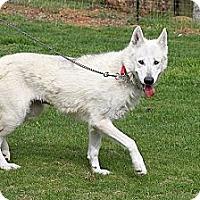 Adopt A Pet :: Aphrodite - Ashland, OR