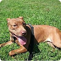 Adopt A Pet :: Rain - Metairie, LA