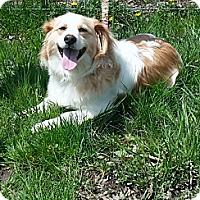Adopt A Pet :: Happy - Delaware, OH