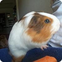 Adopt A Pet :: Eva - San Antonio, TX