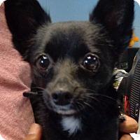 Adopt A Pet :: Pepe - Orlando, FL