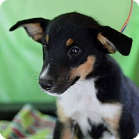 Adopt A Pet :: Roper - Hamburg, PA
