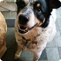 Adopt A Pet :: Colbie - Acushnet, MA