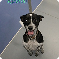 Adopt A Pet :: Rambo - Winter Haven, FL