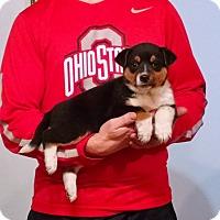 Adopt A Pet :: Faith - Lakewood, OH