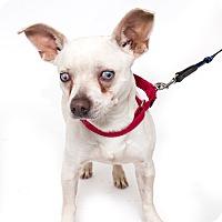 Adopt A Pet :: Kennedy - Jupiter, FL