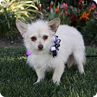 Adopt A Pet :: CLAUDE - Newport Beach, CA