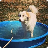 Adopt A Pet :: Tori - Georgetown, KY