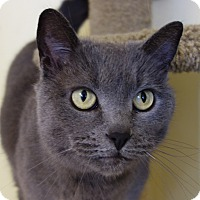 Adopt A Pet :: Wednesday - Greenfield, IN