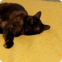 Adopt A Pet :: Patches - Weeki Wachee, FL
