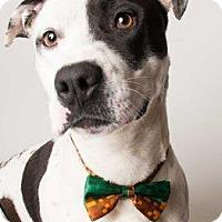 Adopt A Pet :: *YOSHI - Sacramento, CA