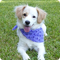Adopt A Pet :: Marigold - Mocksville, NC
