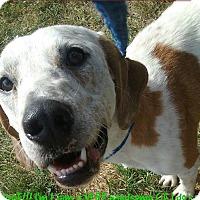 Adopt A Pet :: Liam - Cranston, RI