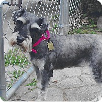Adopt A Pet :: Alma~~ADOPTION PENDING - Sharonville, OH