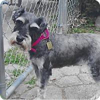 Adopt A Pet :: Alma - Sharonville, OH
