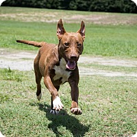 Adopt A Pet :: Lucy Lawless - Jersey City, NJ