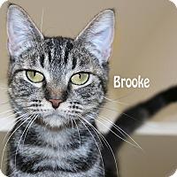 Adopt A Pet :: Brooke - Idaho Falls, ID