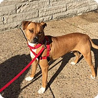 Hound (Unknown Type) Mix Dog for adoption in Ardmore, Pennsylvania - Camo