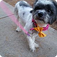 Adopt A Pet :: TINKA - Bridgewater, NJ