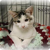 Adopt A Pet :: Sabby - Glen Mills, PA
