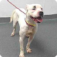 Adopt A Pet :: 17-12272 @ SEAACA - Beverly Hills, CA