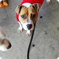 Adopt A Pet :: Mi Mi - Summerville, SC