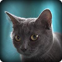 Adopt A Pet :: Violet - Spring Valley, NY