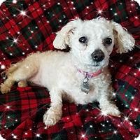 Adopt A Pet :: Pending!!Claire - IL - Tulsa, OK