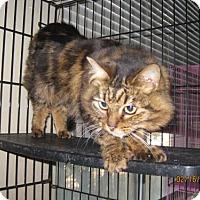 Adopt A Pet :: Jelly Bean - Glendale, AZ