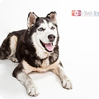 Adopt A Pet :: Rolo - Clearwater, FL