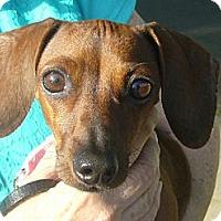 Adopt A Pet :: Leia - San Jose, CA
