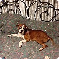 Adopt A Pet :: Meacham - Hancock, MI
