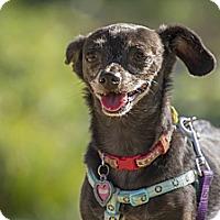 Adopt A Pet :: Benji - Orange, CA