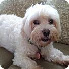 Adopt A Pet :: Gen. Colin Powell (TN)