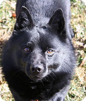 Greensboro Nc Rescue Dogs