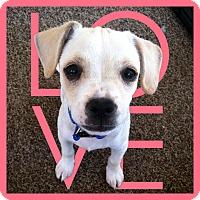 Adopt A Pet :: Rico - La Quinta, CA