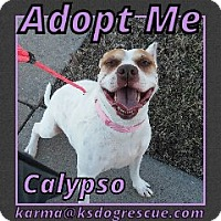Adopt A Pet :: Calypso - Cheney, KS