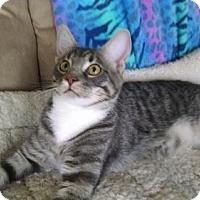 Adopt A Pet :: Truffle - Watkinsville, GA