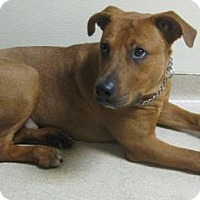 Adopt A Pet :: Rusty - Gary, IN
